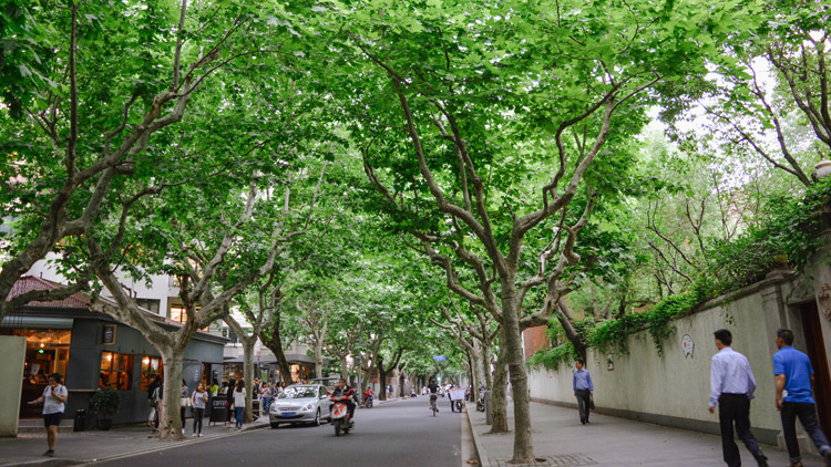 Shanghai Walks: Hidden French Concession