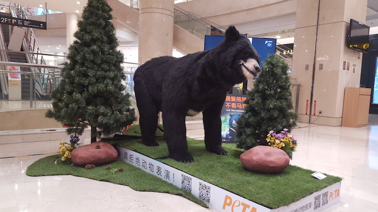 bear tour in Beijing