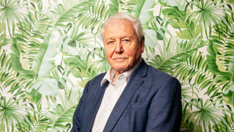 David Attenborough: 'Everybody should be aware what is happening to the whole world'