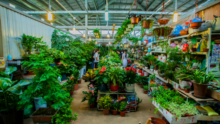 The best plant and flower markets in Shanghai