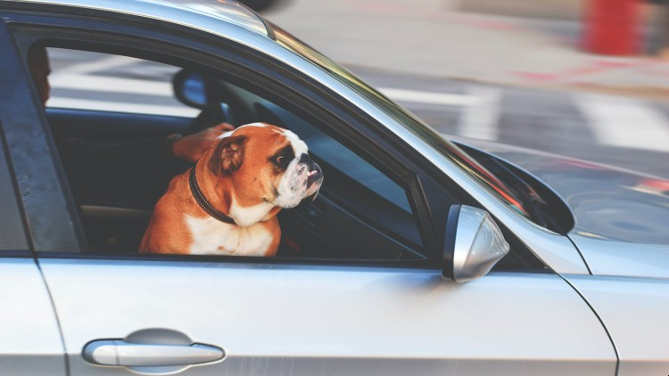 Got a pet? There's a new dog taxi service in Shanghai